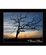 Texas Sunset - MS0028C - Fine Art Print - $17.50