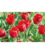Soylicious Tempting Tulips 15 ounce candle bowl  soy  - $15.99