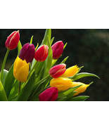 Soylicious tempting tulips 5 ounce candle bowl soy  - $6.99