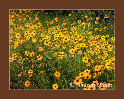 Wf 143 yellow flowers