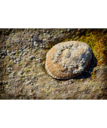 Sea Shell Rock, Fine Art Photos, Paper, Metal, Canvas Prints - $40.00