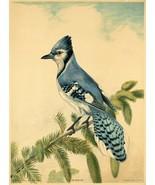 Wall Decor Poster.Home Room interior art design.Blue Jay bird.Nature.11649 - $10.89+