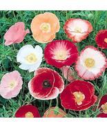Non GMO Bulk Poppy Seed, Poppy, Shirley Single Mix (25 Lbs) - $967.18