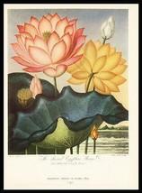 Sacred Egypt Beane 1938 Dunthorne Flower Fruit Antique Print image 1