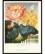 Sacred Egypt Beane 1938 Dunthorne Flower Fruit Antique Print - $19.99
