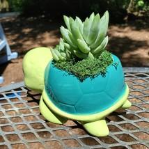 "Turtle Planter & Live Succulent, 5"" Blue Green Ceramic Tortoise Pot, Sedeveria image 8"
