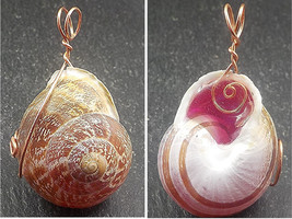 Necklace Pendant. A natural land snail shell pendant. Jewelry, Gift, Curio. - $14.00