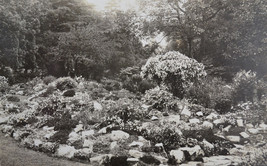 Old Photo Postcard Of Rock Garden c1920s - $5.23