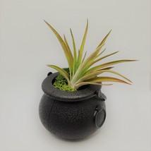 "Airplant in Black Cauldron, Halloween 2"" plastic planter, Witch pot air plant image 2"