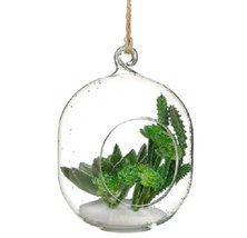 "6"" Artificial Green Succulent in Oblong Orb with Hole Hanging Glass Terr... - $19.79"
