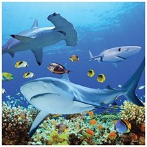 Tree-Free Greetings Premium Refrigerator Magnet, 3.5 x 3.5 Inches, Shark... - $11.31 CAD