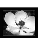 Magnolia Dreams ~ DF0069BW ~ Fine Art Photography - $17.50
