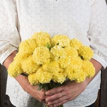 Nosento Limegreen Marigold Seeds / Marigold Flower Seeds - $21.00