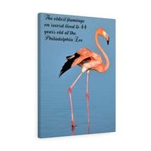 Flamingo Canvas Art Gallery Wrap Best Flamingo Print Canvas Wall Art Uni... - $49.99