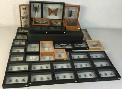 Insect Entomology Lot Collection 36pc Specimen Scorpion Lantern Fly Beetle