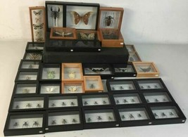 Insect Entomology Lot Collection 36pc Specimen Scorpion Lantern Fly Beetle image 1