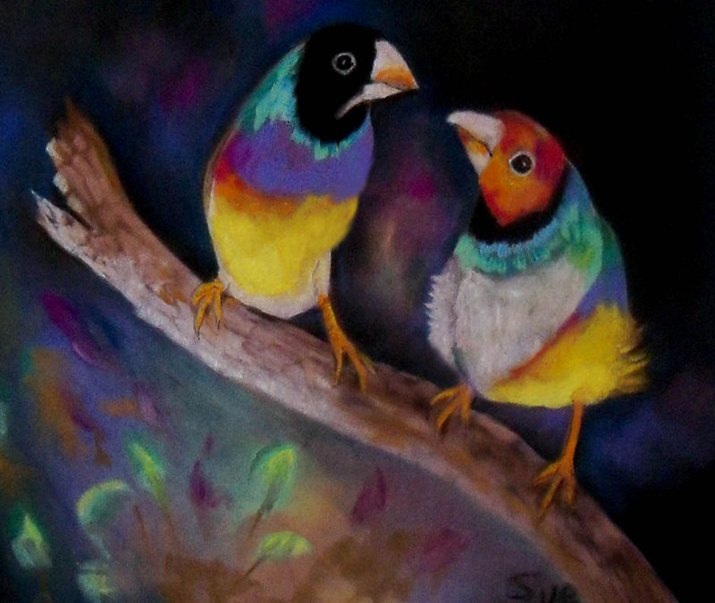 Original Art painting 16x20 matted and  framed pastel painting Lady Gouldians