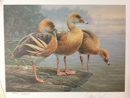 First of Nation Australian Duck Stamp Print - Signed by Daniel Smith - 1... - $222.00