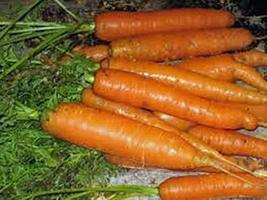 Carrot, Little Fingers Seeds, Non-GMO, 50+ Seeds - $4.49