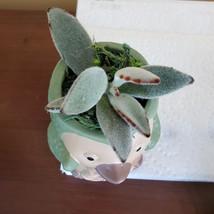 Green Penguin Pot & Succulent, Panda Plant, Kalanchoe Tomentosa, Animal Planter image 2