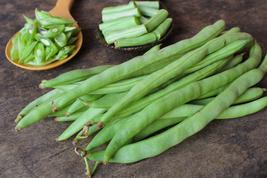 Bean Seeds - Pole - Kentucky Wonder Brown - Vegetable Seeds - Outdoor Living - $35.99+
