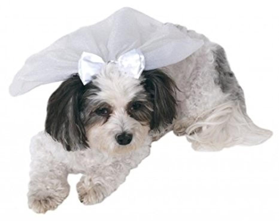 Pet Shop Boutique Animal Wedding Veil Sz S/M, M/L New