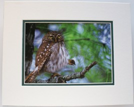 Spare Change by T. D. Mangelsen OwlDouble Matted Print Fits 8x10 Frame - $19.79