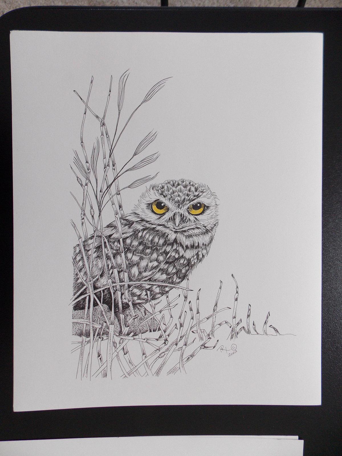Burrowing Owl, Original Pen and Ink, Framed, matted, Bird Art, Free Shipping