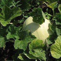 500 Seeds or 1/2 OZ Honeydew Green Flesh Melon Seeds, NON-GMO - $36.95