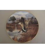 CANADA GOOSE - ATLANTIC FLYWAY collector plate DAVID MAASS Wildlife GEESE - $31.99