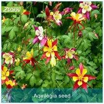 100pcs Aquilegia Seed Flower Seeds Garden Plants Natur Eexotic Flowering - $4.59