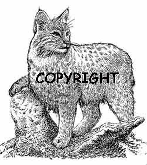 Bobcat New Mounted Rubber Stamp