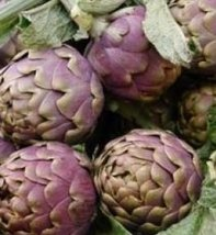 250 Seeds - Purple Italian Globe artichoke/Cynara cardunculus - $58.41