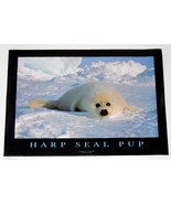 HARP SEAL PUP POSTER FROM 1995  24 BY 34 INCHES - $9.99