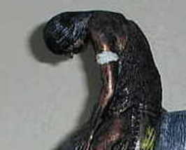 Bighorse1 thumb200