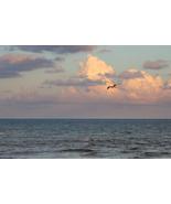 Soaring Gull - Fine Art (12x18) - $24.99