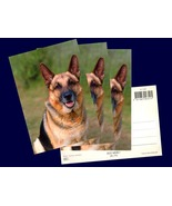 4 pcs. Alsatian, German Shepherd Dog , Postcard Printed in Denmark in th... - $12.00