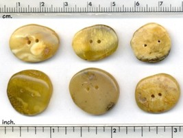 6 pcs Natural Butter, Milk and Honey Amber Buttons Shaped by Nature and Me. - $38.80