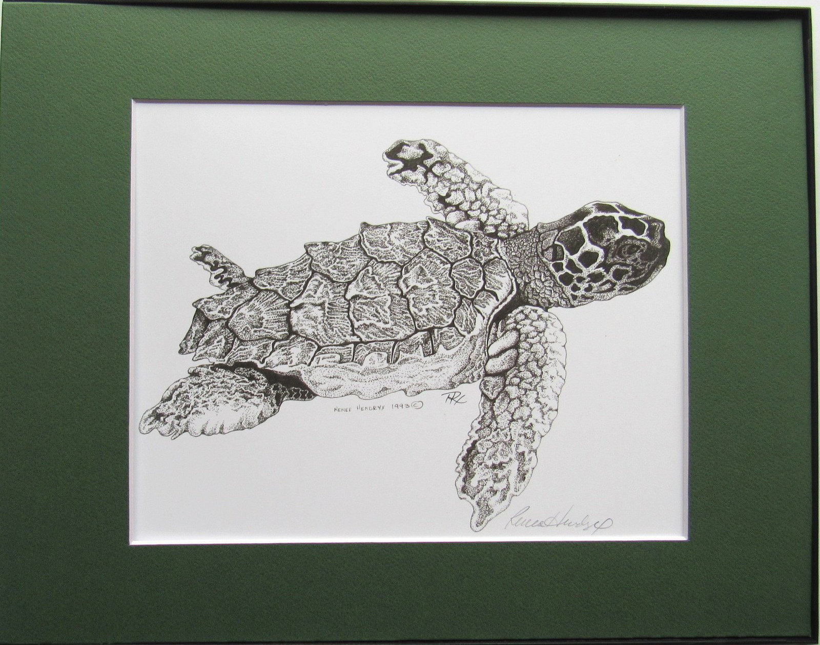 Sea Turtle, Pen and Ink, Framed Matted Sea Life Art Print Art Drawing