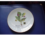 Rx  plate    belladonna thumb155 crop