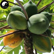 Buy Papaya Fruit Seeds 120pcs Plant Pawpaw Fruit Tree Chaenomeles Sinensis - $9.99