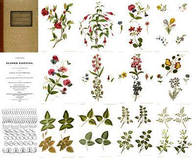 1818 Antebellum Pre-Victorian Flower Painting DIY Guide CD Paint Classic Designs