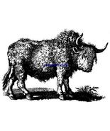 BUFFALO BISON-NEW RELEASE! mounted rubber stamp