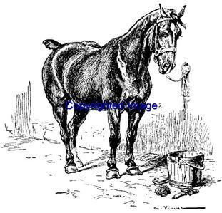 TIED HORSE-NEW RELEASE! mounted rubber stamp