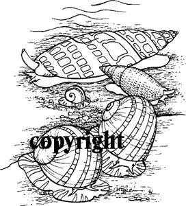 SEASHELLS NEW RELEASE NEW mounted rubber stamp