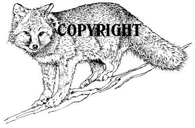 FOX CUB new mounted rubber stamp NEW RELEASE!