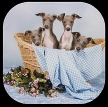GREYHOUND ITALIAN PUPPIES Rubber Backed Coasters #0991 - $8.94