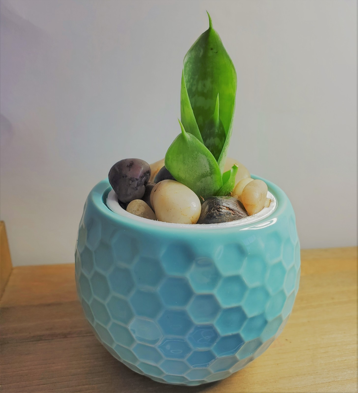 "Primary image for Snake Plant Succulent Ceramic Pot Live Sansevieria 2.5"" Glazed Ceramic Blue"