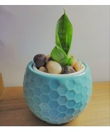 "Snake Plant Succulent Ceramic Pot Live Sansevieria 2.5"" Glazed Ceramic Blue - $14.99"