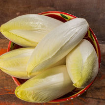 SHIP FROM US ENDIVE SEEDS - WITLOOF CHICORY ~8 Oz PACKET SEEDS VEGETABLE... - $53.00